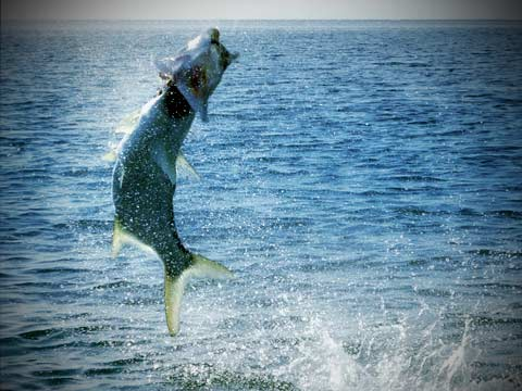 St. Simons Island GA: Great Fishing for the Experienced Fisherman