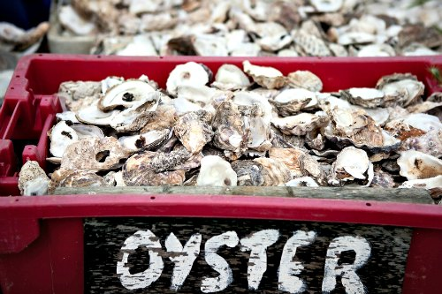 Oyster shells in plastic crates. seaside fishing industry