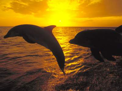 Saint Simons Real Estate: Come & Commune with Bottle-Nose Dolphins